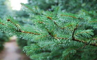 Writing Evergreen Keyword Blog Posts