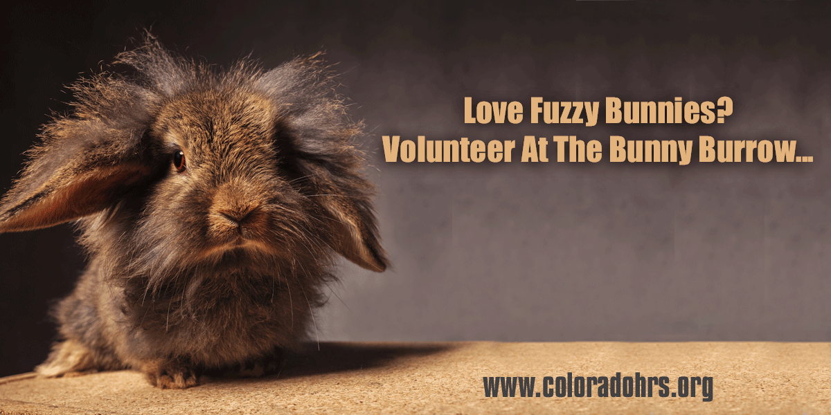 Marketing postcard for non profit volunteers