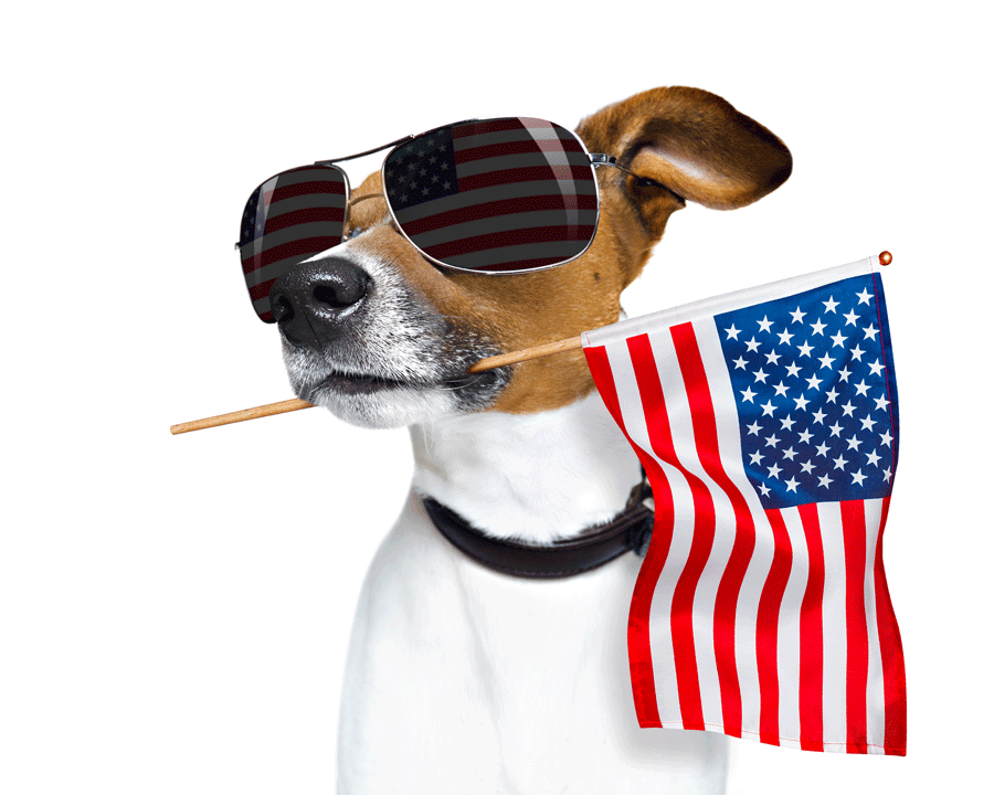 Patriot Dog From Shutterstock