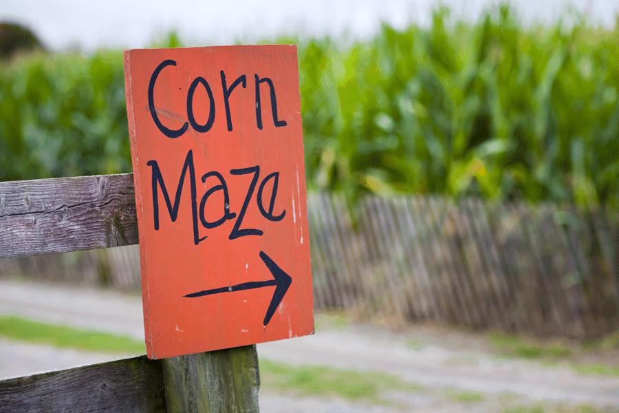 Shutterstock corn maze